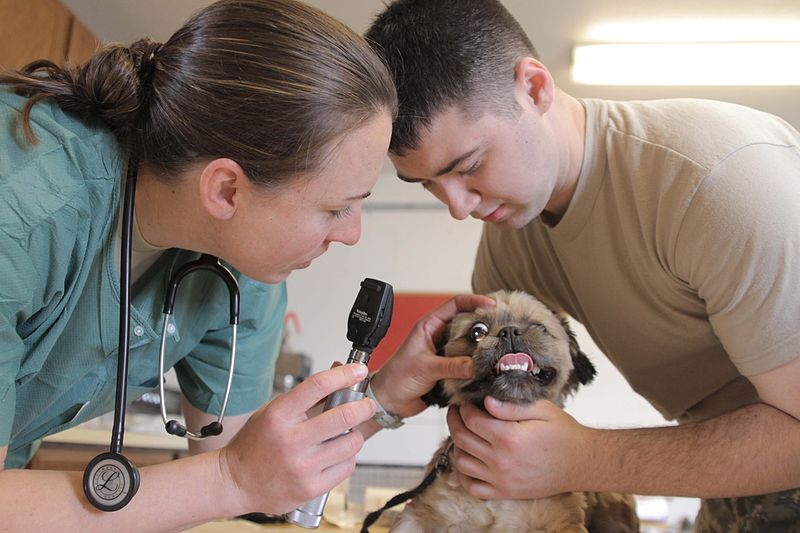 Image of a psychiatric service getting a check up from a veterinarian.