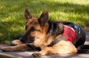 how to certify service dog
